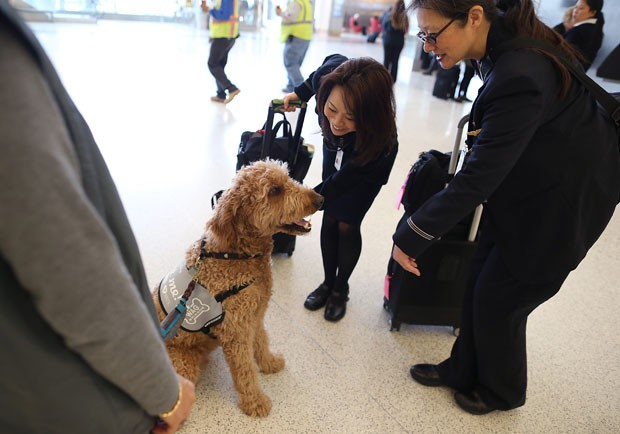 Funcionárias do Aeroporto de Los Angeles interagem com Toby (Foto: Justin Sullivan/Getty Images/AFP)