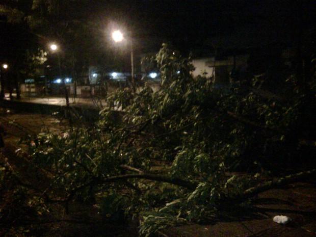 Árvore caída em Av. Ribeira Dantas de Bangu, na Zona Oeste do Rio (Foto: Cristiano Ferreira/Arquivo Pessoal)