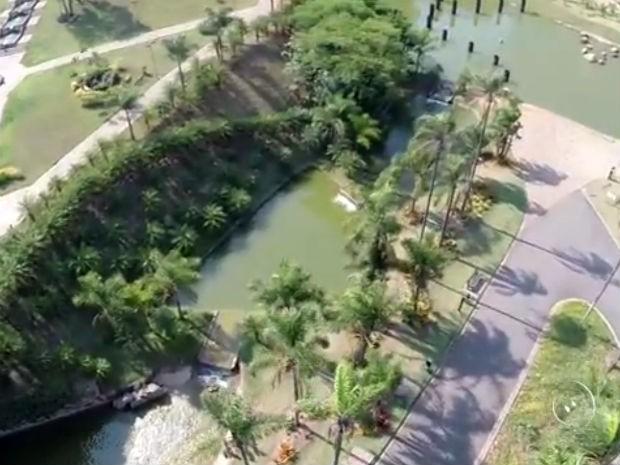 Prefeitura de Jundiaí retira bromélias de parques por conta da dengue (Foto: Reprodução/TV TEM)