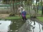 Australiano usa manequim para mostrar poder de ataque de crocodilo