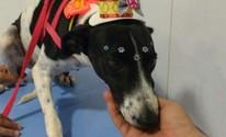 Em dois anos, ONG retira mais de 200 cães e gatos das ruas de Santarém (ONG União Animal/Divulgação)