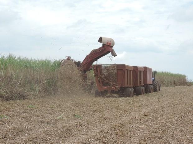 Na região de Rio Preto, produção ficará 20 a 25% abaixo do esperado (Foto: Marcos Lavezo/G1)