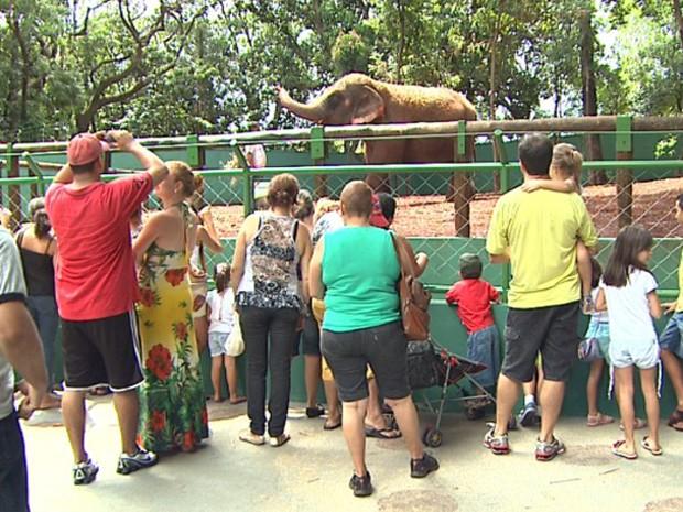 Elefanta Maison já pode ser visitada no Bosque Municipal de Ribeirão (Foto: Reprodução/ EPTV)