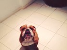 Ex de Deborah Secco coloca o cachorro para 'rezar' antes de comer