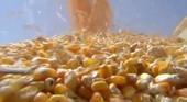 Preço do milho dispara em meio à colheita no Brasil (TV Globo)