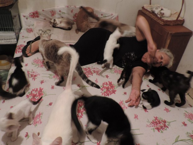 Aposentada dorme com alguns dos mais de 20 gatos que vivem no quarto (Foto: Caio Gomes Silveira/ G1)