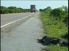 Mortes de animais no RS preocupam administradores da Reserva do Taim