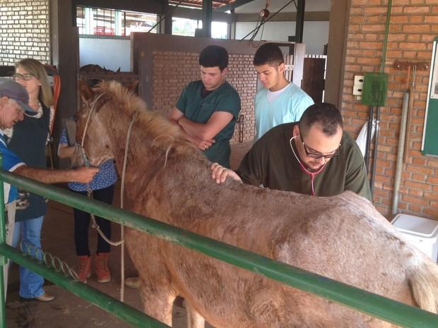 Projeto atende cavalos de carroceiros de forma gratuita em hospital veterinário da UFG em Goiânia Goiás (Foto: Vanessa Martins/G1)