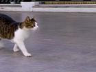 Gato pode ter sido morto à pauladas em Cabo Frio, RJ, segundo veterinário