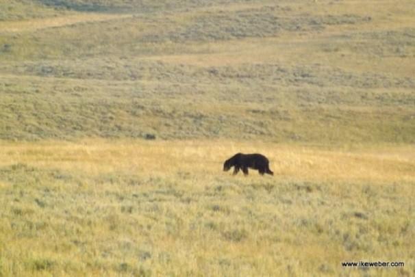 Encontro com urso negro deixou Ike emocionado (Foto: Arquivo pessoal)