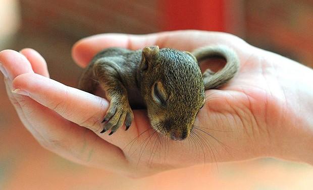 Bebês esquilos só nascem duas vezes ao ano: na primavera e no verão (Foto: Alex Kaufman/onebigphoto.com)
