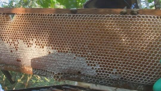 Produção de mel em Vilhena apresenta queda entre 2015 e 2016