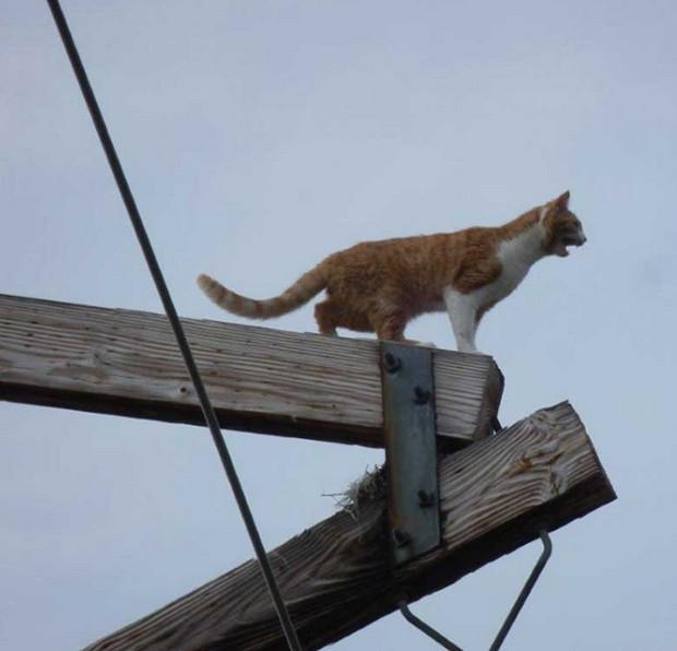 Gato foi resgatado após ficar quatro dias no alto de poste de energia elétrica (Foto: Reprodução/YouTube/W. George Elliott)