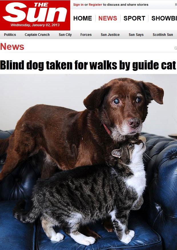 O cão Terfel e sua 'gata-guia' (Foto: Reprodução)