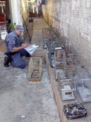 No local ainda havia diversas gaiolas (Foto: Polícia Ambiental/Cedida)