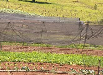 Telas de sombreamento protegem produção (Foto: Reprodução/TV Fronteira)