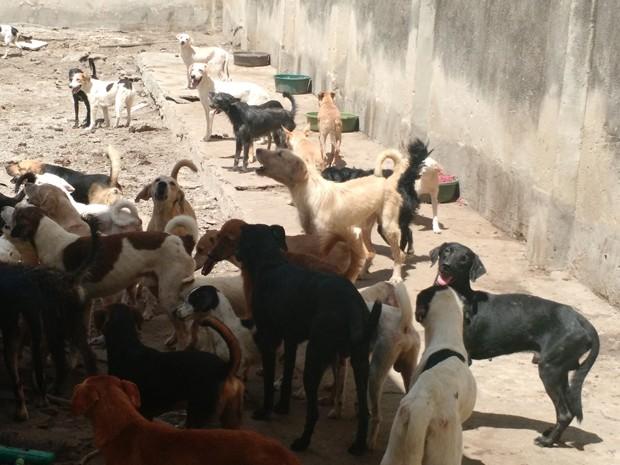 Cerca de oitenta cães foram abandonados na casa pela ex-inquilina, uma mulher de 60 anos que não quis se identificar. (Foto: Penélope Araújo/G1)