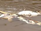 Empresa deverá apresentar laudo sobre morte de peixes em Jundiaí