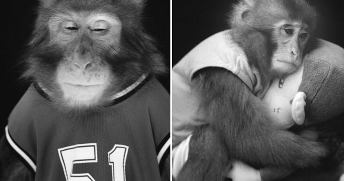 Fotógrafo japonês registra macacos como se fossem humanos