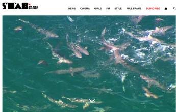 Mar lotado de tubarões assusta e adia competição na Austrália Ocidental