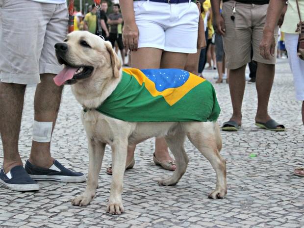Cachorro usou bandeira nacional durante manifestação em Manaus (Foto: Suelen Gonçalves/G1 AM)