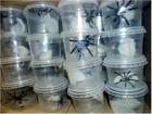 Mais de 70 aranhas enviadas pelos Correios são apreendidas em MT