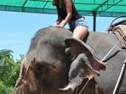 Gyselle Soares anda de elefante e visita pontos turísticos na Tailândia