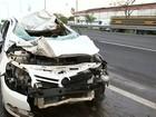 Animais soltos na rodovia provocam dois acidentes em Bauru