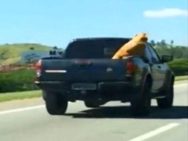 Empresário flagra cão transportado solto em caminhonete na SP-280 (Foto: Arquivo Pessoal/Ricardo Lise)