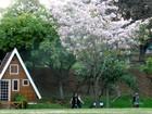 Primavera deve continuar quente e com chuva acima da média
