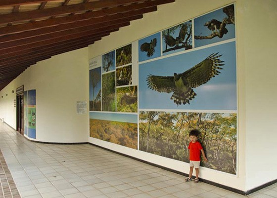 Mario Almeida Palo, filho do fotógrafo, em 2011, em uma das exposições fotográficas do pai, no Hotel Sesc Porto Cercado no Mato Grosso  (Foto: © Haroldo Palo Jr)