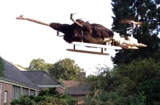 Bart Jensen criou um quadricóptero a partir da carcaça de um avestruz, e exibiu a peça em um evento na Holanda (Foto: YouTube/Reprodução/pricordia)