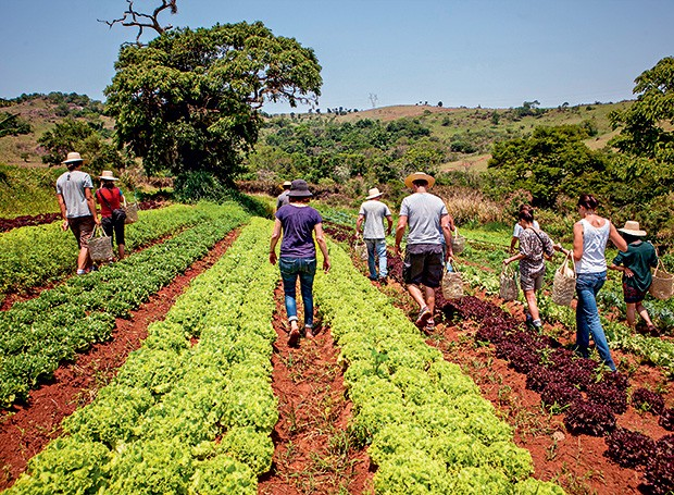 Horta orgânica da Fazenda Santa Adelaide (Foto: Divulgação)