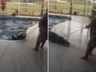 Americano se assusta ao encontrar jacaré na piscina de sua casa