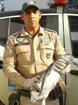 Pinguim foi resgatado em Pedra de Guaratiba (Foto: Guarda Municipal/Divulgação)