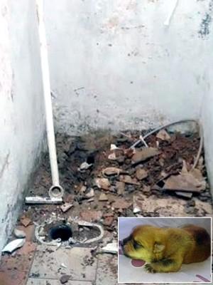 Família destrói banheiro em SP para salvar cão que caiu em cano (Arquivo Pessoal)