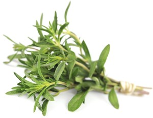Thyme fresh herb (Foto: Getty Images/iStockphoto)