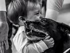 Feiras na Grande Florianópolis buscam lar para cães e gatos