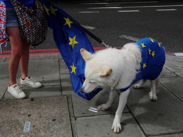 Manifestante levou pastor alemão branco ao protesto Marcha pela Europa feito neste sábado (3) em Londres (Foto: REUTERS/Luke MacGregor)