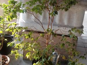 Sistema simples de irrigação de plantas por gotejamento pode ser feito em casa, com garrafas pet, e ajuda a economizar água