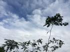 Inmet prevê tempo instável e chuva para fim de semana em MS