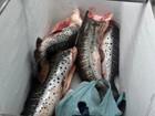 Polícia apreende mais de 130 kg de pescado irregular em Mato Grosso