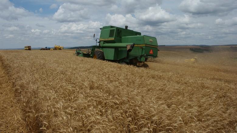 trigo_plantação (Foto: Ernesto de Souza / Editora Globo)