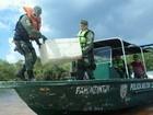 Polícia liberta quelônios encontrados em embarcação no Amazonas