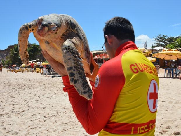 Tartaruga foi resgatada por bombeiros na Praia do Sol, em João Pessoa (Foto: Walter Paparazzo/G1)