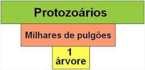 Número de protozoários é maior do que o de pulgões nas árvores (Foto: Reprodução / Colégio Qi)