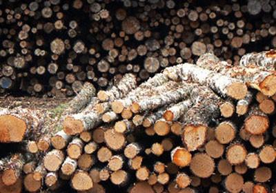 fazenda_sustentavel_madeira (Foto: Acervo/Ed. Globo)