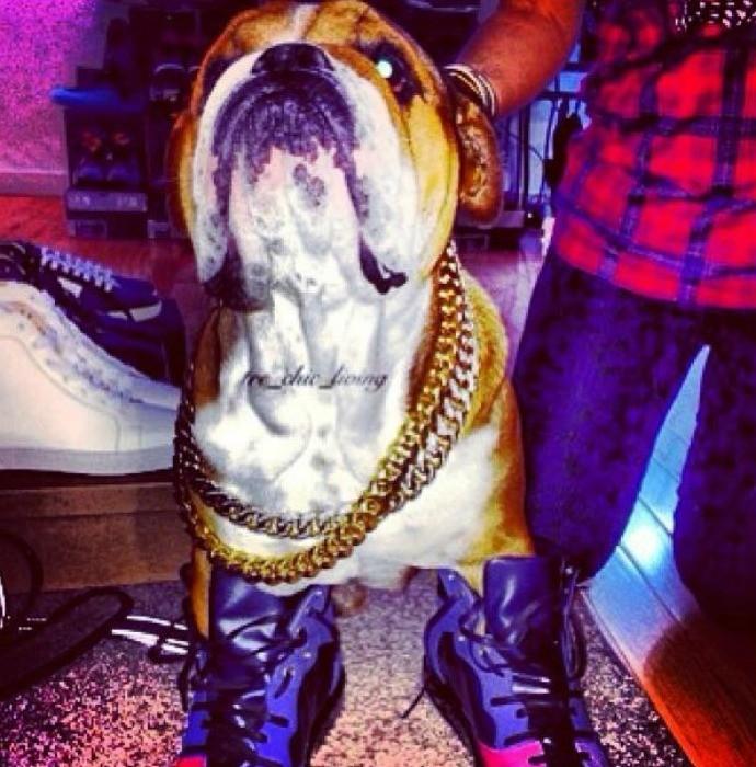 Xodó de Lewis Hamilton, Roscoe é fotografado ao estilo rapper (Foto: Reprodução / Instagram)