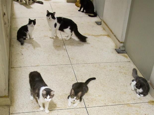 Corredor de prédio em Vila Isabel, no Rio, tinha gatos por toda parte (Foto: Janaína Carvalho / G1)