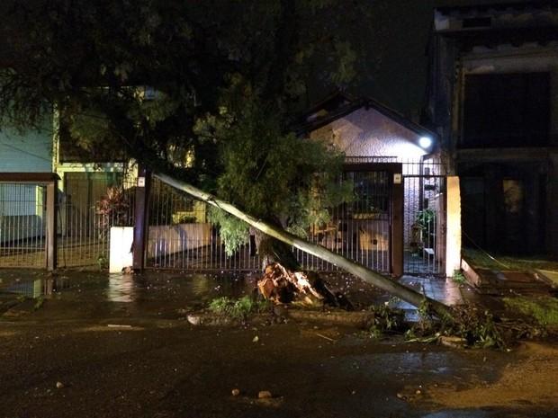 Árvore cai sobre grade na capital (Foto: Paulo Ledur/RBS TV)
